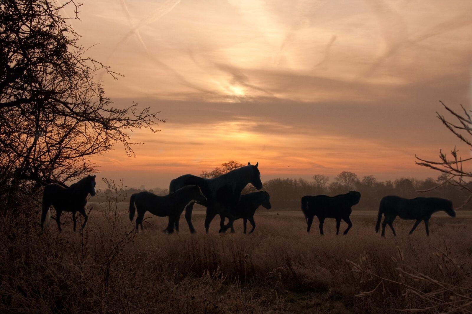 Silhouette Horses-min